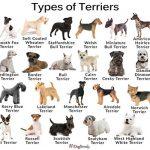نکاتی که باید برای انتخاب سگ در نظر بگیرید؟!