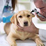 6 مسئله ای که بهتر است راجع به دامپزشک خود بدانید