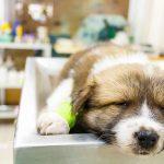 نگاهی به دلایل اسهال در سگها و گربه ها